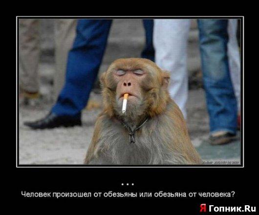 Человек произошел от обезьяны или обезьяна от человека